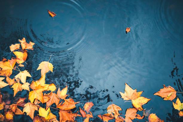 autumn background - staw woda stojąca zdjęcia i obrazy z banku zdjęć