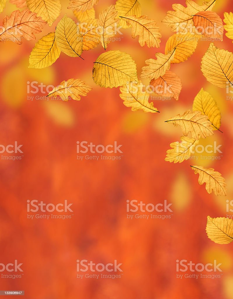Autumn Background (XL) royalty-free stock photo