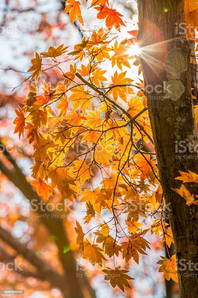 autumn Background Lizenzfreies stock-foto