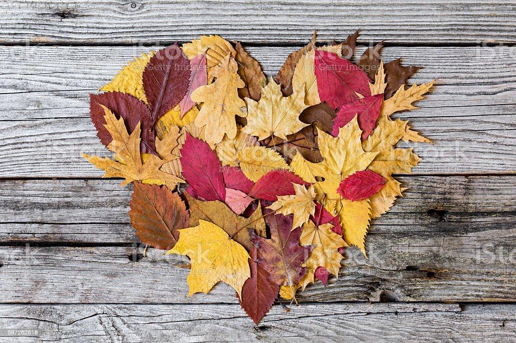Herbst Hintergrund  – Foto