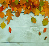 Autumn background with multi-colored leaves on a wooden table.