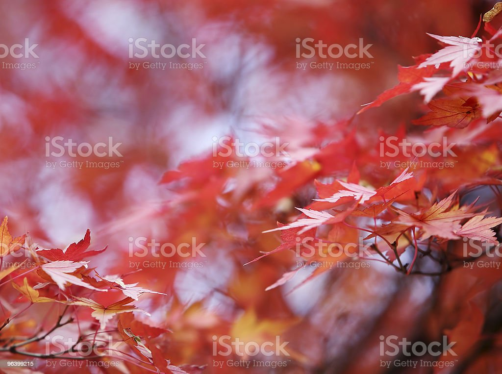 autumn background - Royalty-free Autumn Stock Photo