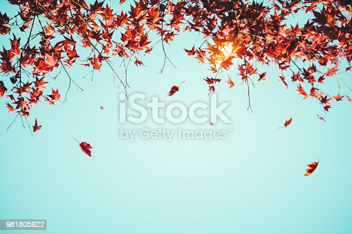Red leaves falling from the tree.