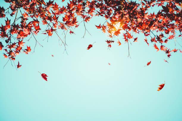 Fond d'automne - Photo