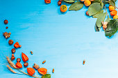 autumn background red yellow leaves nuts fruit 1