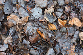 Autumn background. Rotting wet fallen leaves, fall