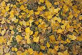 Fall foliage sunny autumn background on grass in sunny morning light. Beautiful sunny colorful fall season