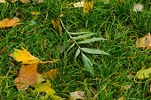 Autumn Thanksgiving background. Fall foliage sunny autumn background on grass in sunny morning light