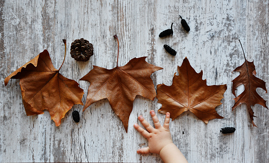 Autumn background with baby hand on old woods