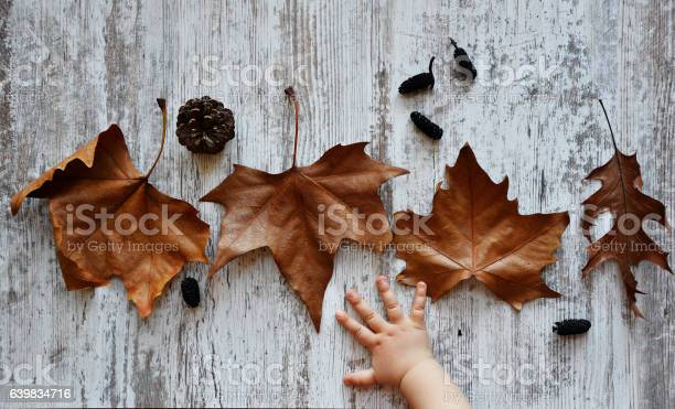 Autumn background with baby hand on old woods picture id639834716?b=1&k=6&m=639834716&s=612x612&h=z2jr gpltlmsmpopynw8qhoui uuns8cvdtodijavp0=