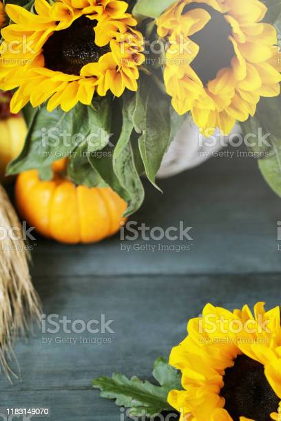Autumn background with beautiful sunflowers and pumpkins picture id1183149070?b=1&k=6&m=1183149070&s=612x612&h=v0zje02uilzoh ds8gleyob27qputb b mzgec6ficy=