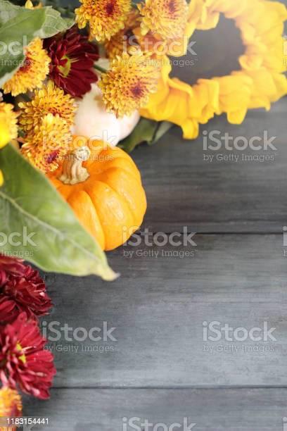 Autumn background with beautiful sunflowers and pumpkins picture id1183154441?b=1&k=6&m=1183154441&s=612x612&h=qja7xgg5x2kgmiibh rv oladj7nf5y5tvxus3ezuvm=