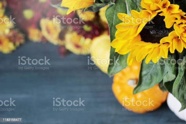 Autumn background with beautiful sunflowers and pumpkins picture id1183155477?b=1&k=6&m=1183155477&s=612x612&h=dk4tq7lbqot77j8n  znnuxozcfg0w6jaatl texjri=