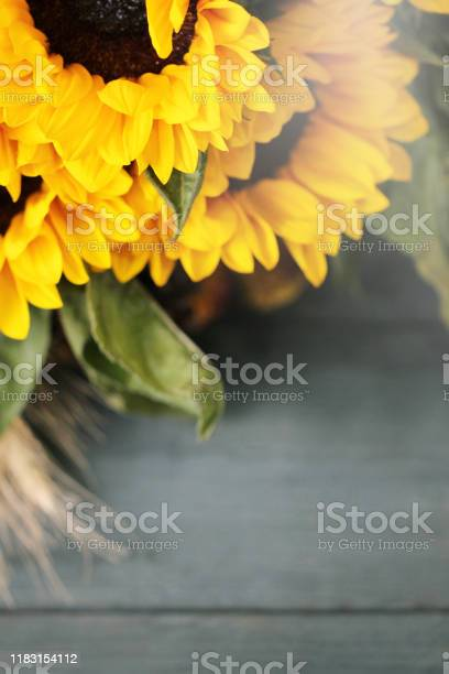 Autumn background with beautiful sunflowers top view picture id1183154112?b=1&k=6&m=1183154112&s=612x612&h=wz3xr 3tnm79vaajvn1pkwh7w1zskyhy2lhy1aqtm9y=