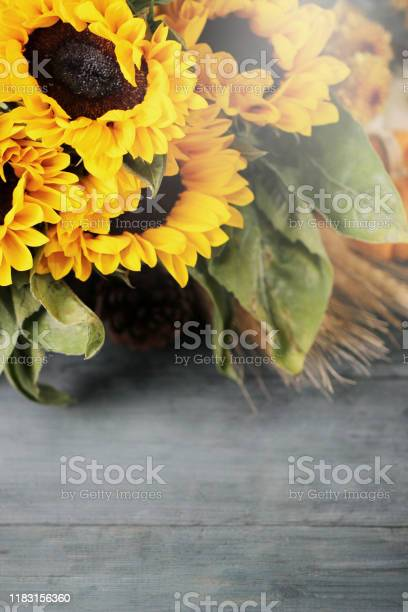 Autumn background with beautiful sunflowers top view picture id1183156360?b=1&k=6&m=1183156360&s=612x612&h=r6vedqrvypgk7g7co5yzeekf vwxqhozstwria5dwa0=
