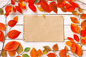 autumn background with branches and colorful autumnal leaves, empty paper sheet with button