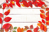 Autumn background with branches, colorful leawes