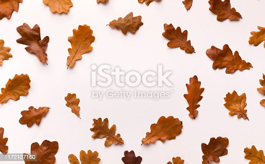 istock Autumn background with brown fallen leaves on white 1172137160