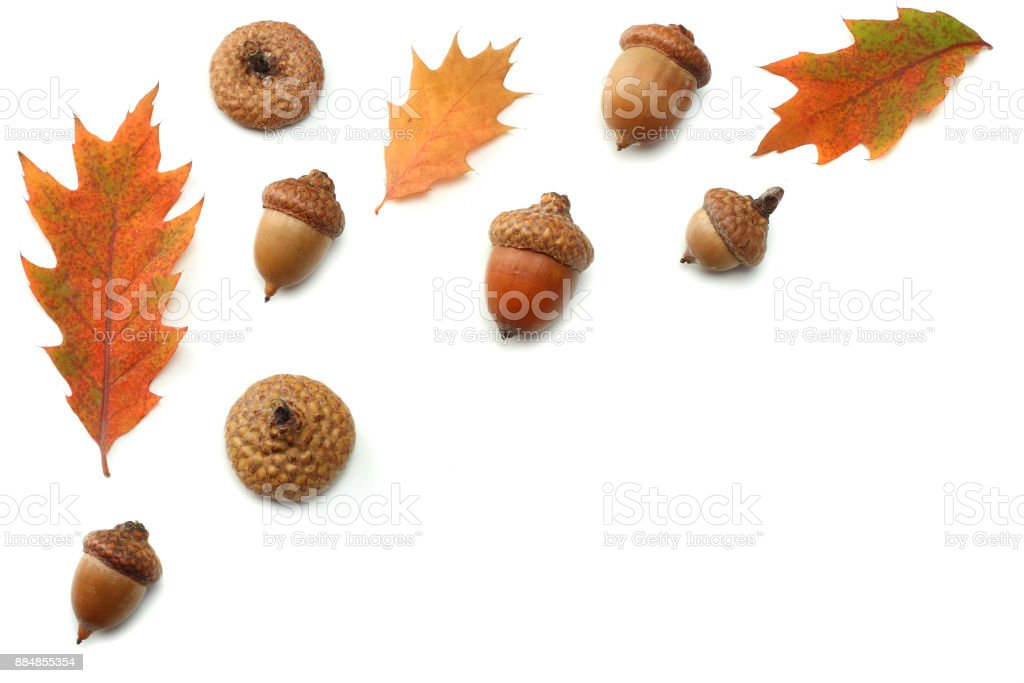 autumn background with colored oak leaves isolated on white background. top view stock photo