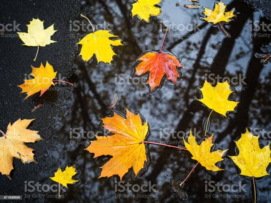 Autumn background with colorful leaves on wet walk side. stock photo