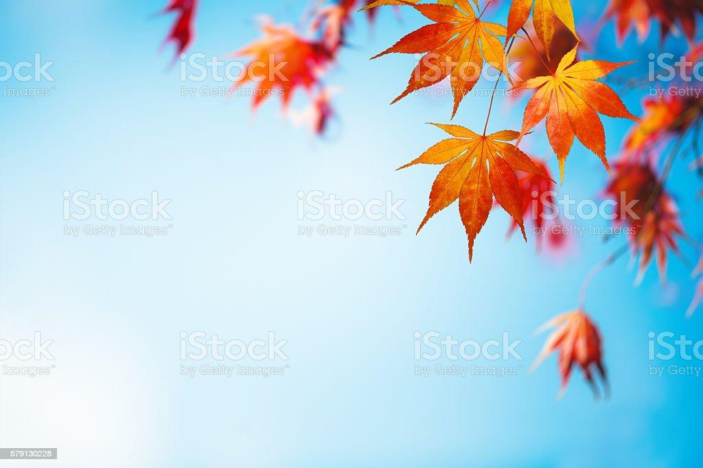 Automne fond avec des feuilles colorées - Photo