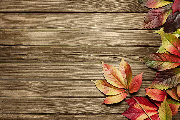 Autumn Background With Copy Space Stock Photo