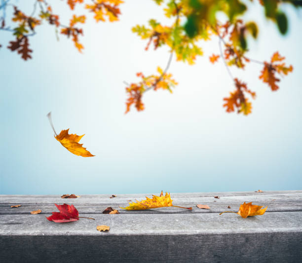 Autumn Background With Falling Leaves stock photo