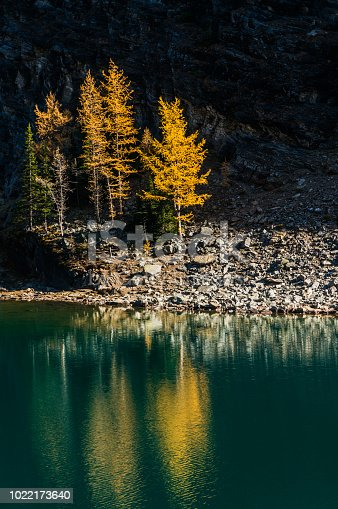 Autumn background with golden trees reflection at Lake Agnes, Lake Louise, Alberta, Canada