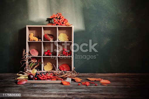 1020586746 istock photo autumn background with leaves and berries 1175835300