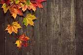 Autumn background with maple leaves on old woods