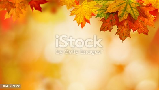 istock autumn background with maple leaves 1041709358