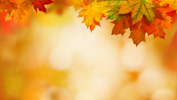autumn background with maple leaves autumn background with maple leaves fall leaves stock pictures, royalty-free photos & images