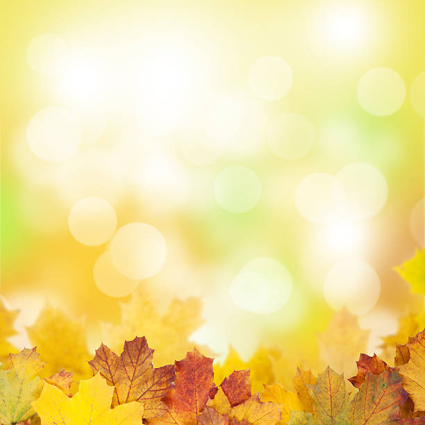 autumn background with maple leaves - natural phenomenon stock photos and pictures