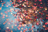 Autumn leaves floating on water surface.