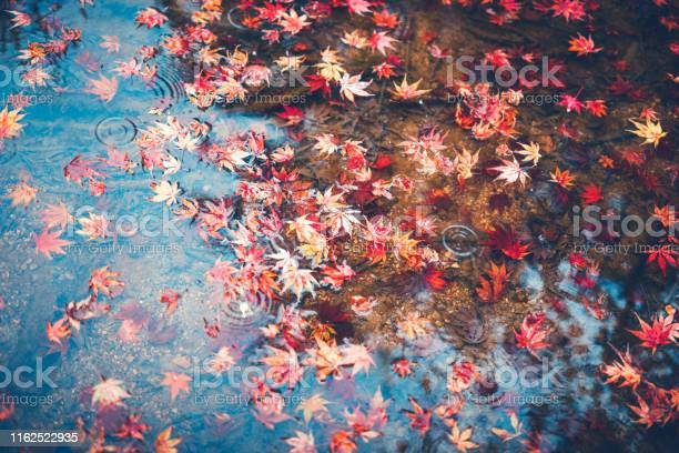 Photo of Autumn Background With Red Maple Leaves