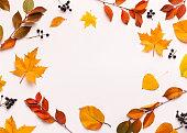 空白の空白の丸いフレームを持つ秋の背景
