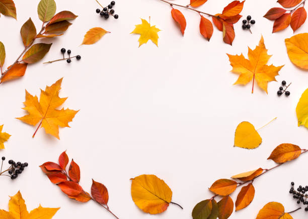 autumn background with round frame with white blank space - leaf imagens e fotografias de stock