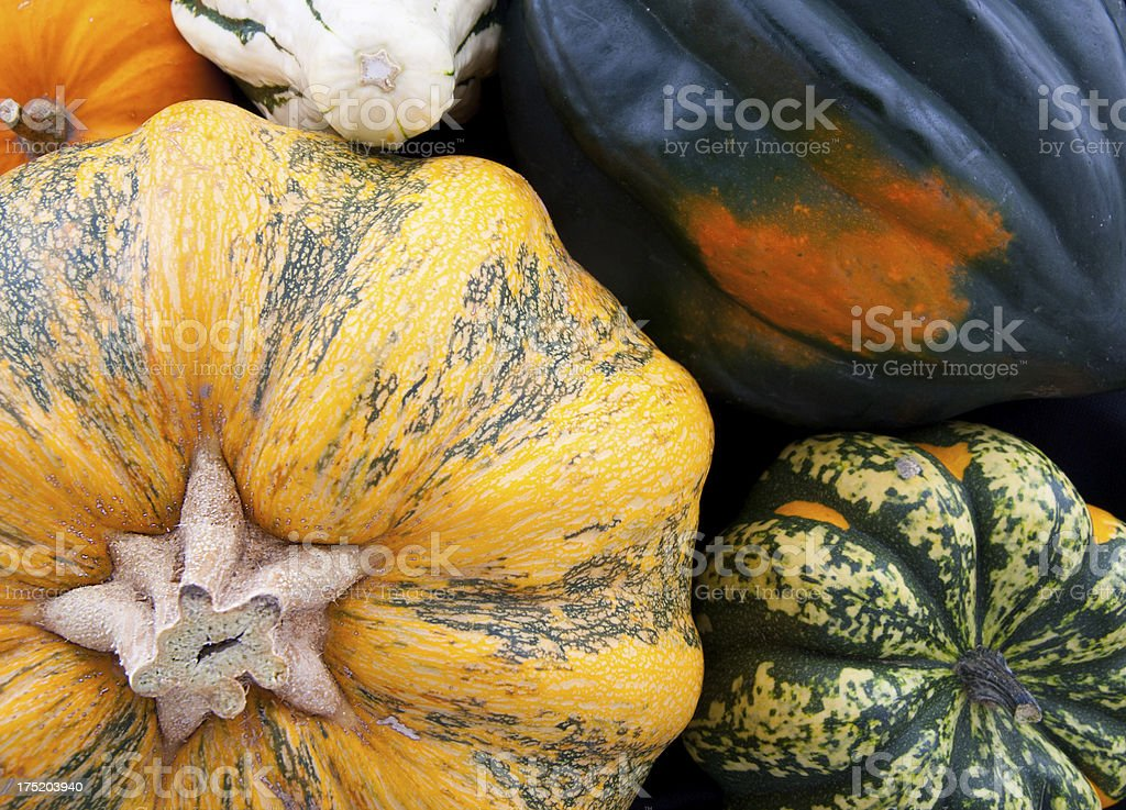 Autumn Background with Squash and Pumpkin royalty-free stock photo