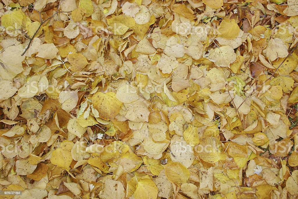 Autumn backgrund royalty-free stock photo