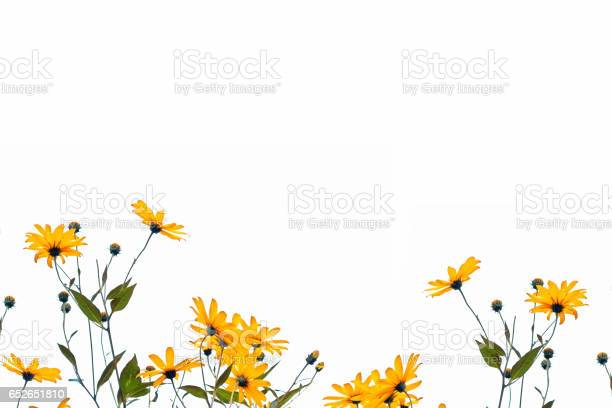 Autumn beautiful colorful dahlia flowers picture id652651810?b=1&k=6&m=652651810&s=612x612&h=fmgytrlk7sqavs7qxflasy9slqc0lw8ji90du9xh6ke=