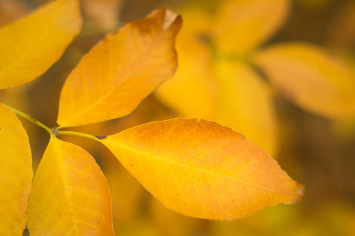 1038696838 istock photo Autumn beautiful leaves. Yellow red nature background. Texture of dry leaf 1040011908