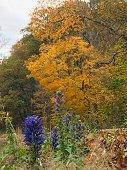 Purple flowers around autumn trees