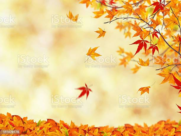 Autumn Beauty Stock Photo - Download Image Now