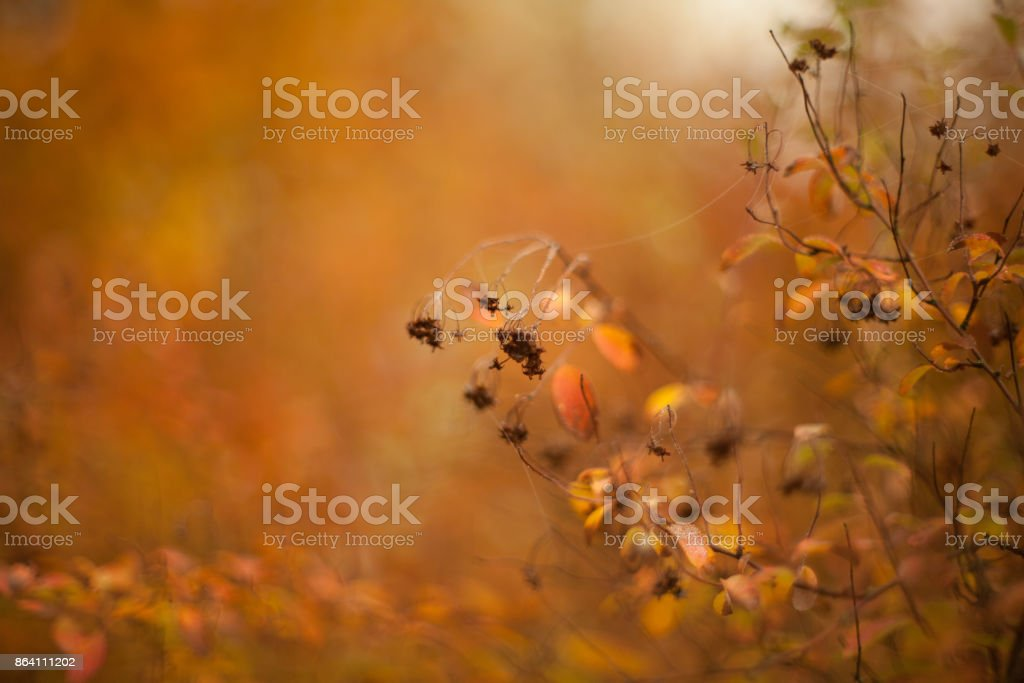 Autumn beech leaves decorate a beautiful nature bokeh background royalty-free stock photo