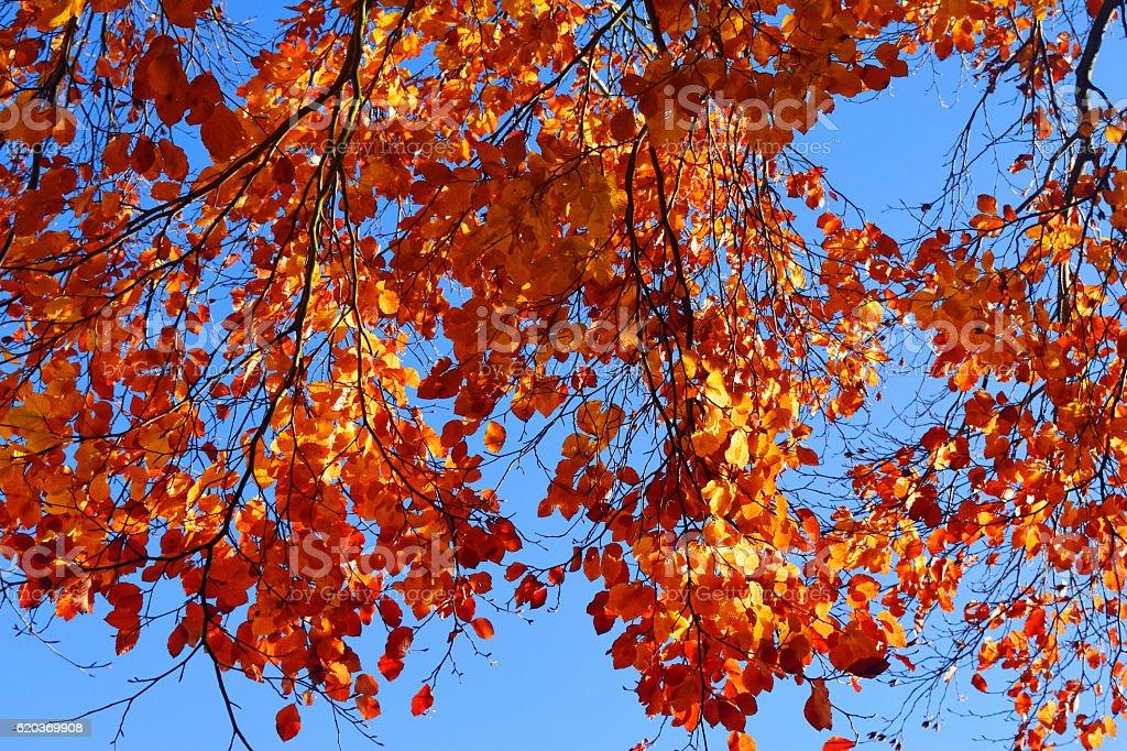 Autumn Beech Overhang zbiór zdjęć royalty-free
