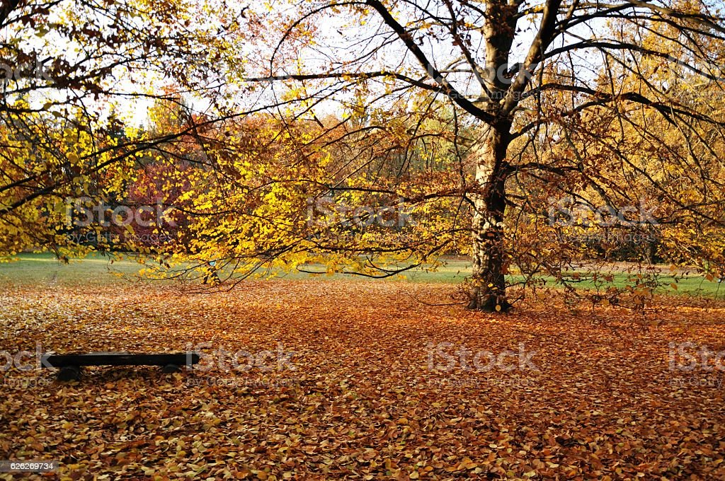 Autumn bench stock photo