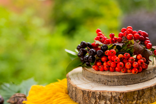 autumn berries and fruits on wooden table on nature background.Rowan berries, black chokeberry berries, viburnum in the basket.Copy space.Autumn gifts, harvest season.