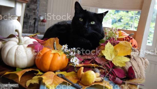 Autumn black cat picture id1167784527?b=1&k=6&m=1167784527&s=612x612&h=z9ycmwpae8ouyvkltwb7qkkq9tf7nxaa g 1a7im8 0=