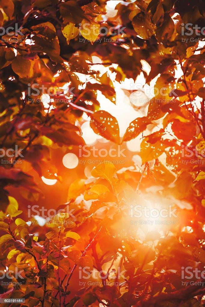 Autumn blurred background stock photo