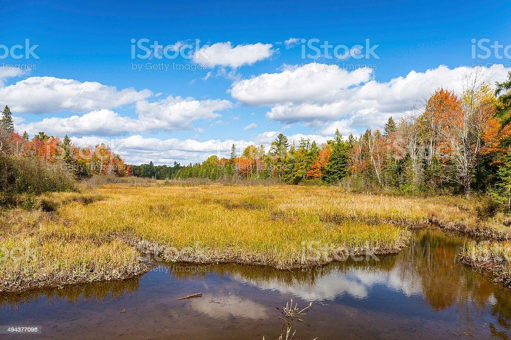Autumn Bog and Fall Colors - Ontario, Canada stock photo